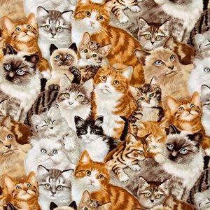 Petpourri - Cats