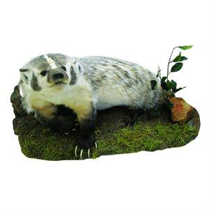 Badger - Full Mount