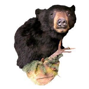 Black Bear - Half Mount