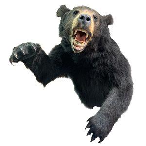 Black Bear - Half Shoulder Mount
