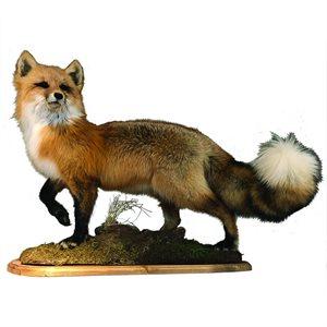 Red Fox - Full Mount