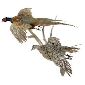 Ring Necked Pheasant (Male/Female Pair) - Full Mount
