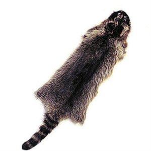 Raccoon Fur