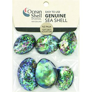 Paua Shell Collectables (6 per Package)
